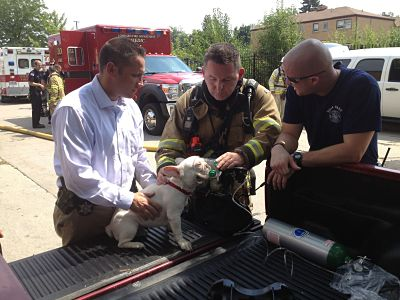 Fire Safety Personnel Giving a Dog Oxygen in the Bed of a Truck