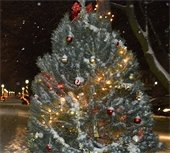 Holiday Tree/Light Recycling